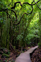 Heart of the Bamboo Forest